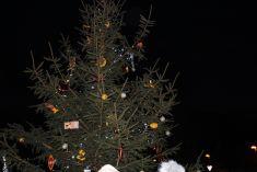 Vánoční strom V Lipkách